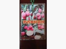 [9成新] 蜜香無籽荔枝高壓苗/請先來電詢價花苗/樹苗無破損有使用痕跡