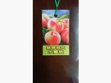 [9成新] 熱帶水蜜桃嫁接苗/請先來電詢價花苗/樹苗無破損有使用痕跡
