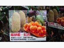 [9成新] 紅肉榴槤蜜嫁接苗/請先來電詢價花苗/樹苗無破損有使用痕跡