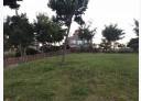 林口區-仁愛路一段土地,590坪