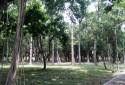 綠樹成蔭 大安森林公園