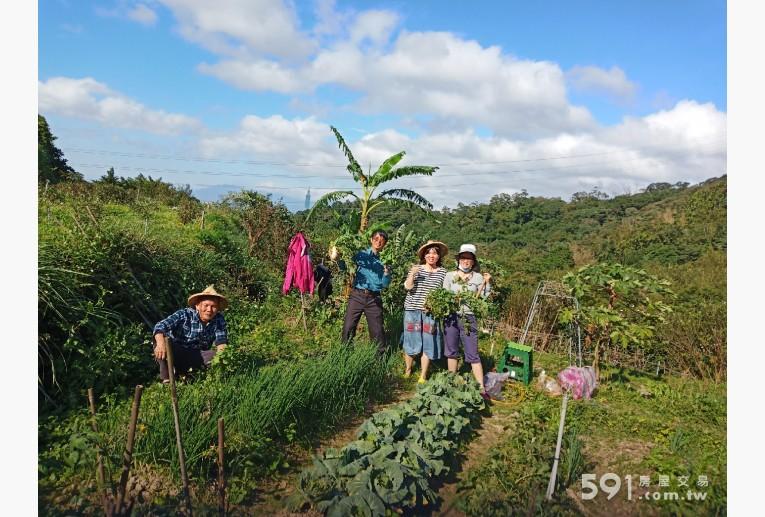 台北租屋,文山租屋,土地出租,開心農夫與採收自種的蘿蔔很是開心