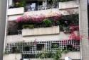 風水好,左朱雀盛花,客緣人源佳。