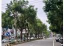 中壢區-興仁路一段店面,80.8坪